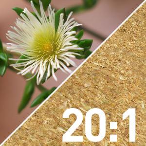 Kanna Powder 20:1 Extract (Sceletium Tortuosum)